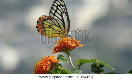 Red Orange Butterfly