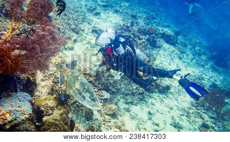 Divers diving at coral reef with sea turtle and different fishes