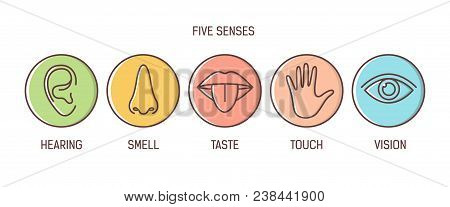 Bundle Of 5 Senses - Hearing, Smell, Taste, Touch, Vision. Set Of Human Sensory Organs Drawn With Ou