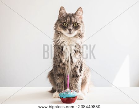 Cute, Fluffy, Gray Kitten And A Festive Cupcake With One Candle On A White, Isolated Background. Cel