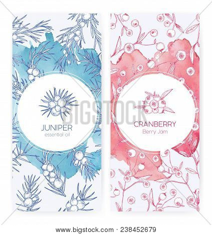 Bundle Of Banner Templates With Juniper And Cranberries Drawn With Contour Lines On Pink And Blue Ba