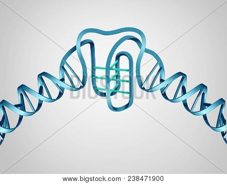 I Motif New Dna Discovery As A Science And Biology Concept As A Molecular Structure As A 3d Illustra