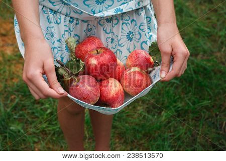 Girl Holding Apples In Skirt Hemline