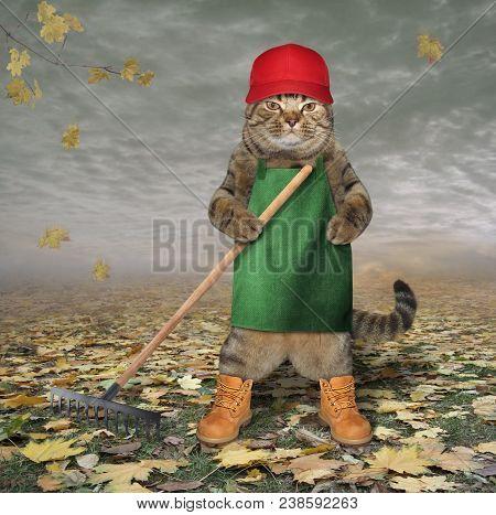 The Cat Gardener Rake Dead Leaves In His Garden.