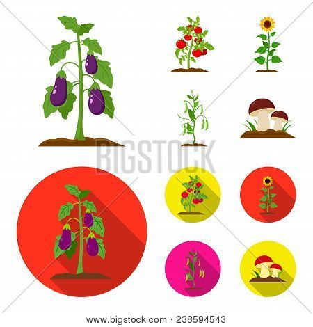 Eggplant, Tomato, Sunflower And Peas.plant Set Collection Icons In Cartoon, Flat Style Vector Symbol