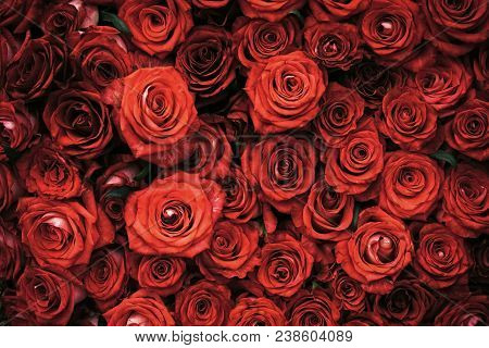 Rose Flowers With Red Petals, Spring. Roses On Floral Background, Floristry. Valentines Day, Love, R
