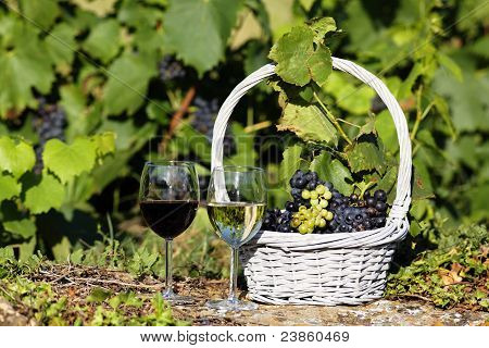 Wine Agriculture