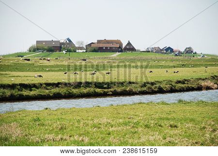 Dwellings on the Warft on the Hallig Hooge in north Friesland. The Halligen (singular Hallig) are ten small German islands without protective dikes in the North Frisian Islands on Schleswig-Holstein's Wadden Sea-North Sea coast in the district of Nor poster
