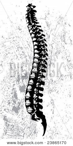 Abstract spinal cord vector