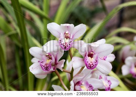 Orchids In Close Up