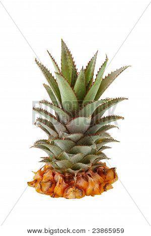 Fresh Pineapple Crown