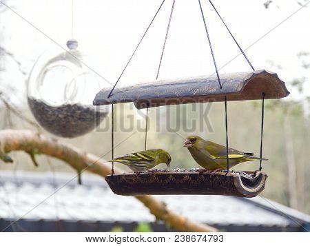 Yellowhammer, Emberiza Citrinella.bird Sitting On A Branch.bird Of Europe.norway