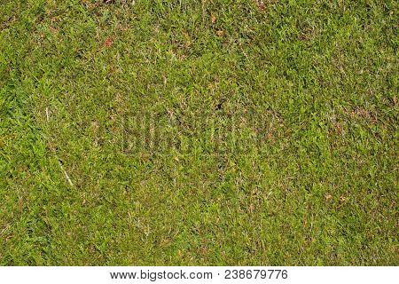 Freshly Cut Conifer Hedge - Gardening Background.