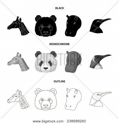 Panda, Giraffe, Hippopotamus, Penguin, Realistic Animals Set Collection Icons In Black, Monochrome,