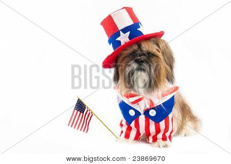 Shih Tzu on the Fourth of July