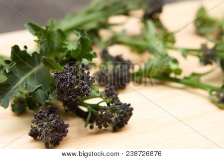 Purple Sprouting Broccoli Heads Of Freshly Picked Purple Sprouting Broccoli
