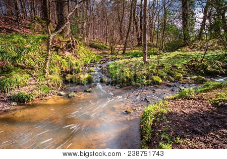 Letah Burn In Springtime Woodland, That Is Letah Wood A Rural Ancient Woodland Through Which Letah B