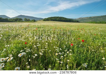 Spring daisy flowers in meadow. Beautiful nature andscapes.