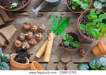 Several Flowerpot Of Home Plants. Planting Potted Flowers And Garden Tools For Pot Plants.