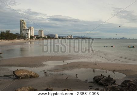 Huahin In The Morning,  Monkey On Sand Beach