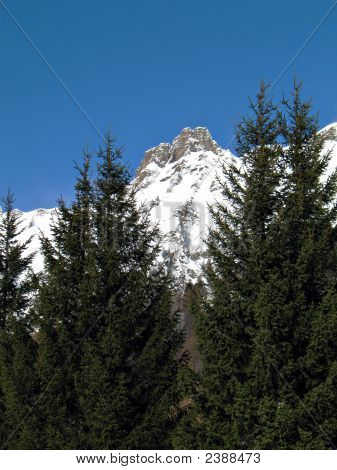 Snowy Summits And Firs