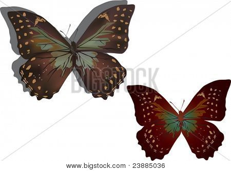 illustration with two different butterflies isolated on white background