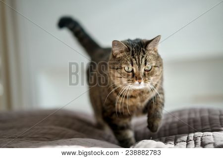 cat in sunny room on the bed