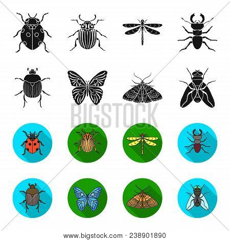 Wrecker, Parasite, Nature, Butterfly .insects Set Collection Icons In Black, Flet Style Vector Symbo