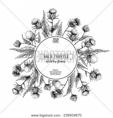 Hand Drawn Wild Hay Flowers. Milk Marian Thistle Flower. Medical Herb. Vintage Engraved Art. Round C