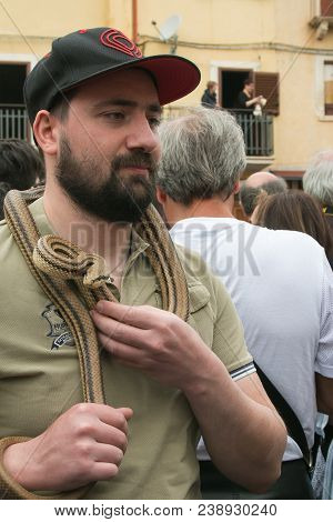 Cocullo, Italy - May 1, 2018: Portrait Of Man With Big Snake In The Neck For The Saint Dominic Feast