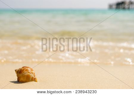 Sea Shells And Soft Wave On The Sandy Beach, Summer Concept With Sandy Beach.