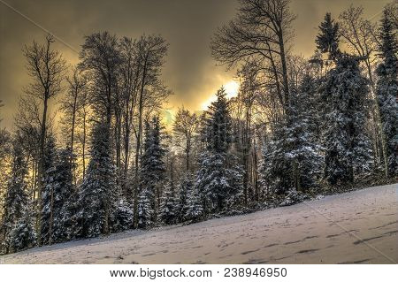 Medvednica forest in winter in Zagreb Croatia poster