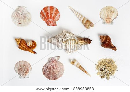 Collection Of Sea Shells On White Canvas