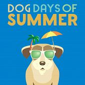 Dog days of Summer Time for adventure. Cute comic cartoon. Colorful humor retro style. Canine in sunglasses enjoy beach leisure relax. Summertime vacation journey. Vector banner background template poster