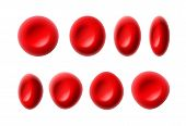 Vector set of red blood cells or erythrocytes isolated on white background poster
