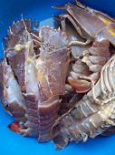 Flatheaded lobster (Thenus orientalis) seafood in Thailand poster