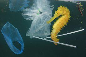 Plastic pollution in ocean. Seahorse fish and plastic garbage