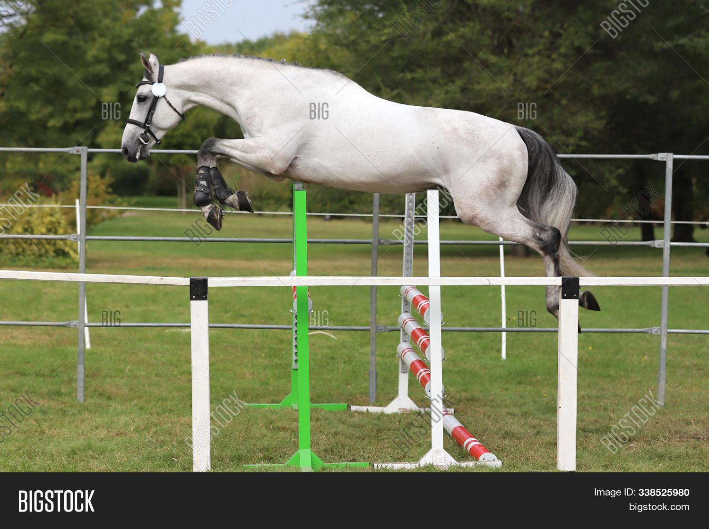 Young Beautiful Sport Image Photo Free Trial Bigstock