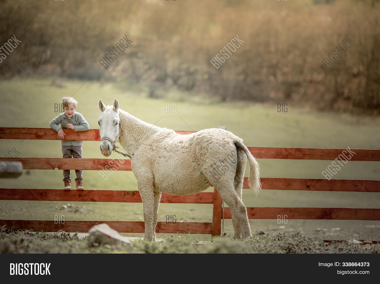 Boy 6 Years Old Image Photo Free Trial Bigstock