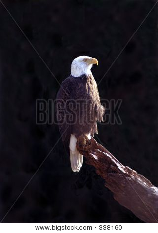 Lonesome Eagle