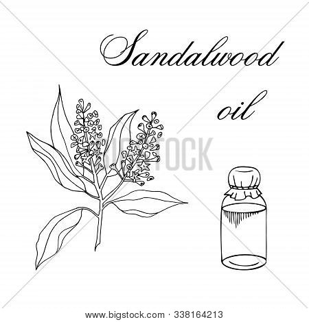 Vector Sketch Illustration With Essential Oil Of Sandalwood On A White Background