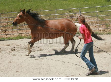 Lunging A Horse