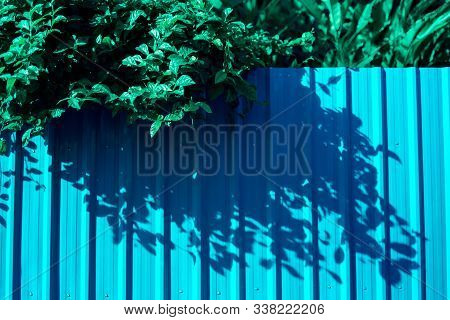 House Siding Fence With Leaves On Zinc Fence Wall In Colorful Concept.