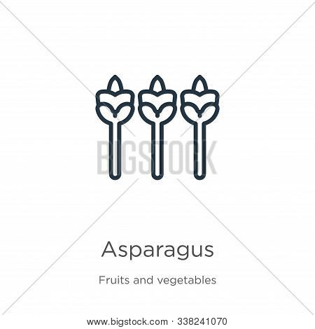 Asparagus Icon. Thin Linear Asparagus Outline Icon Isolated On White Background From Fruits Collecti