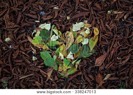 Autumn Leaves On The Forest Floor With A Green Heart Of Foliage