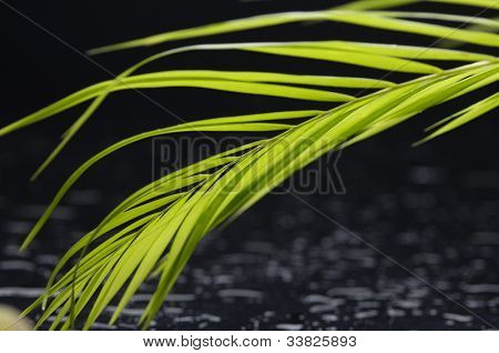 Still life with palm leaf on water drops background
