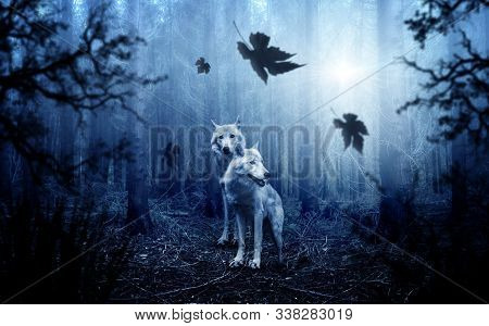 Dog Sits In Green Grass In The Fog In A Forest And Looks Into The Distance. Foggy Summer Day. Beauti