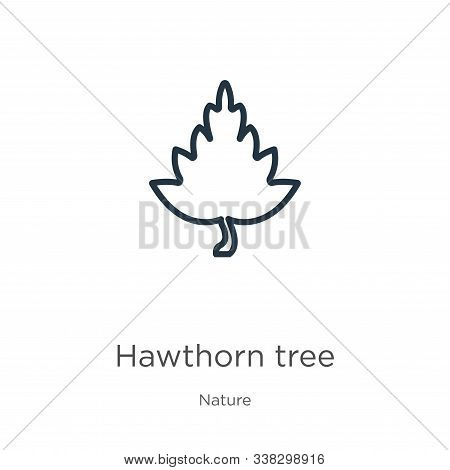 Hawthorn Tree Icon. Thin Linear Hawthorn Tree Outline Icon Isolated On White Background From Nature