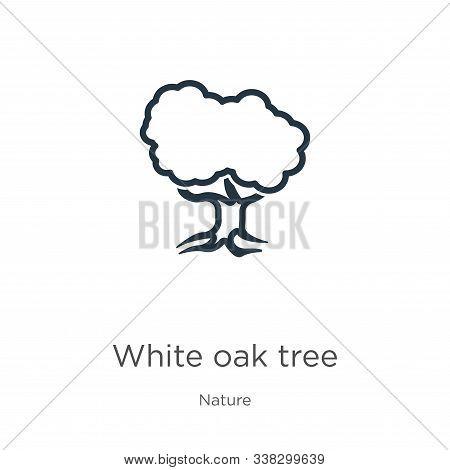 White Oak Tree Icon. Thin Linear White Oak Tree Outline Icon Isolated On White Background From Natur