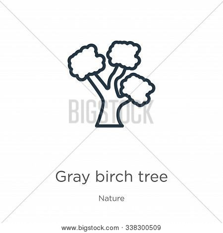 Gray Birch Tree Icon. Thin Linear Gray Birch Tree Outline Icon Isolated On White Background From Nat